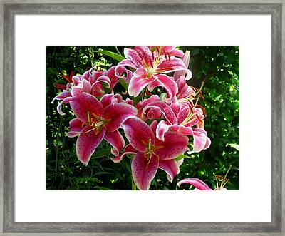 Pink Tiger Lilies Framed Print by Kathy Long