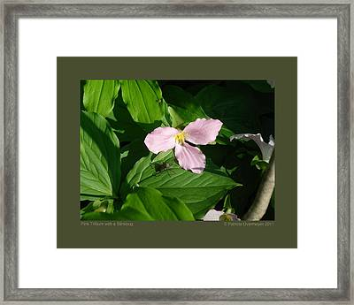 Framed Print featuring the photograph Pink Trillium Witha Stinkbug by Patricia Overmoyer