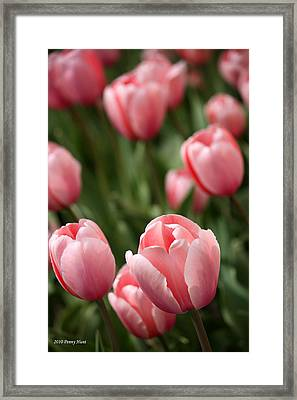 Framed Print featuring the photograph Pink Tulips by Penny Hunt