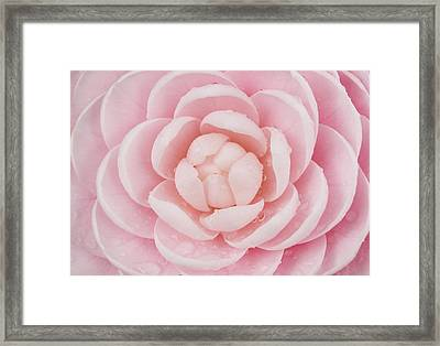 Pink Up Close And Personal Framed Print by Rich Franco