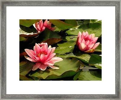 Pink Water Lilies Framed Print by Design Windmill