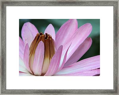 Pink Water Lily Macro Framed Print
