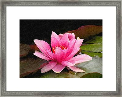 Pink Water Lily Framed Print by Design Windmill