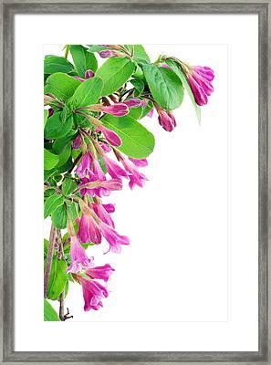 Framed Print featuring the photograph Pink Weigela Postcard by Aleksandr Volkov
