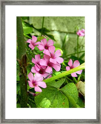 Framed Print featuring the photograph Pink Wild Flowers by Ester  Rogers