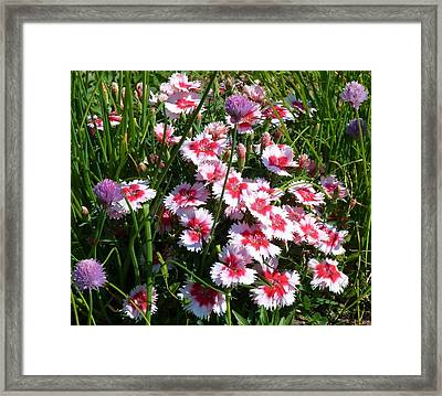 Pinks In The Clover Grass Framed Print by Jeanette Oberholtzer
