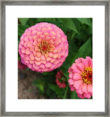 Pinks The Color Framed Print by Bruce Bley