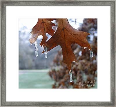 Pinoak And Ice Framed Print by Louise Peardon