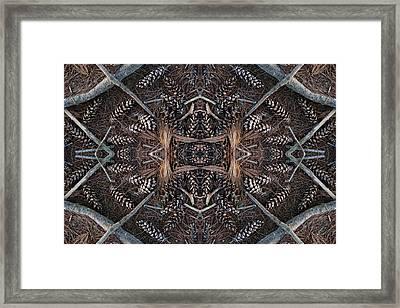 Pinus Strobus Framed Print by Ed Kelley