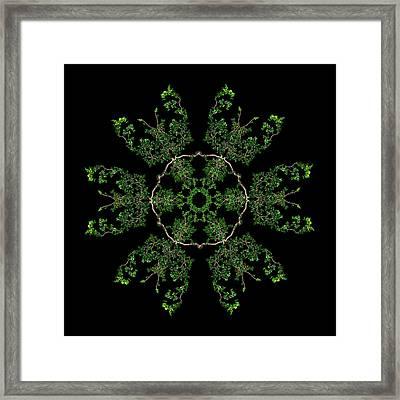 Pinwheel II Framed Print by Debra and Dave Vanderlaan