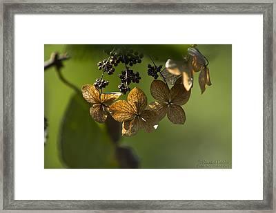 Pinwheels Framed Print by Ronald Hoehn
