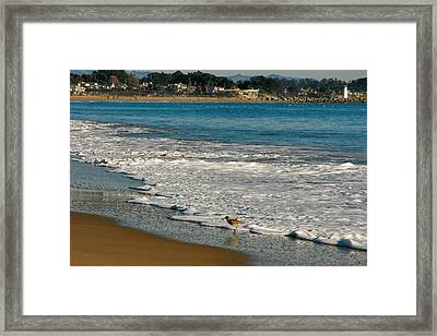 Piper Framed Print by David Taylor