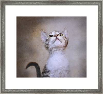 Piper Framed Print by Pat Abbott
