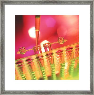Pipetting Liquid Framed Print by Tek Image