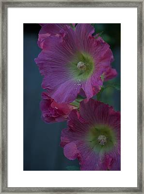 Framed Print featuring the photograph Piquant by Joseph Yarbrough