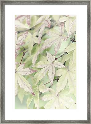 Pistachio Maple Framed Print by David Lade
