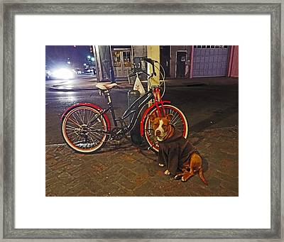 Pit Bull In A Hoodie In The French Quarter Of New Orleans Framed Print