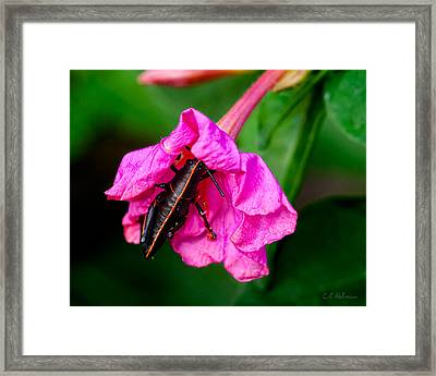 Pit Stop Framed Print by Christopher Holmes