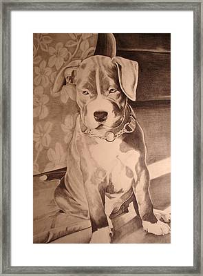 Pitty Pet Portrait Framed Print by Yvonne Scott