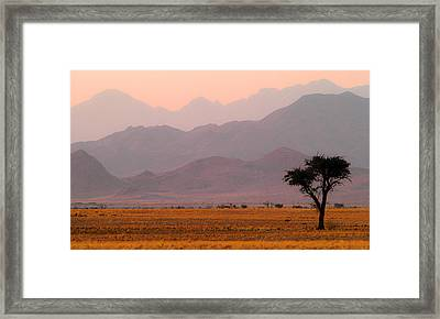 Plain Tree Framed Print