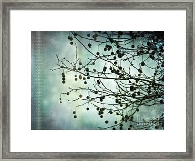 Plane Beauty - London Plane Tree Framed Print by Jay Taylor