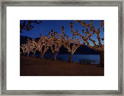 Plane Trees At Christma Framed Print