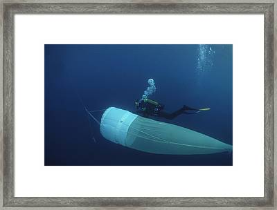 Plankton Collection Framed Print by Alexis Rosenfeld
