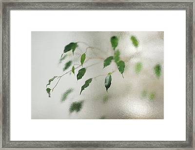 Plant Behind Glass Framed Print by Matthias Hauser