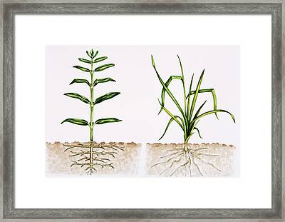 Plant Comparison Framed Print by Lizzie Harper