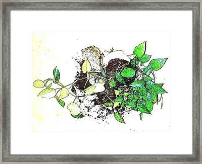 Framed Print featuring the mixed media Plant Falls by YoMamaBird Rhonda