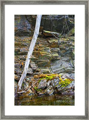 Plant Life On Rocky Canadian Lake Shore Framed Print by Gordon Wood