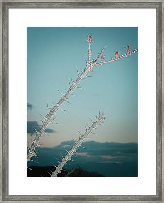 Plant Framed Print by Naxart Studio