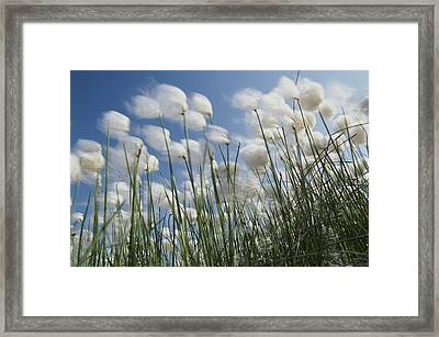 Plant Pods Blowing In The Wind, Yukon Framed Print