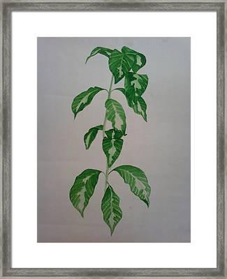 Plant Framed Print by Shilpa V N