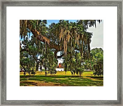 Plantation Framed Print by Steve Harrington