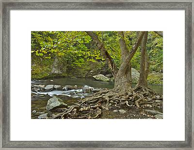 Planted By The Rivers Of Water Framed Print by Michael Peychich