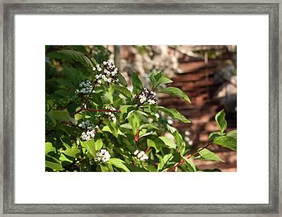 Plants Beside Beaver Creek Villa Framed Print