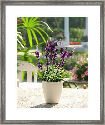 Plastic Lavender Flowers  Framed Print by Nawarat Namphon