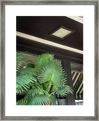 Framed Print featuring the photograph Plastic Palms And Striped Awnings by Louis Nugent