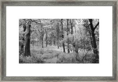 Platinum Forest Framed Print by Sarah Couzens
