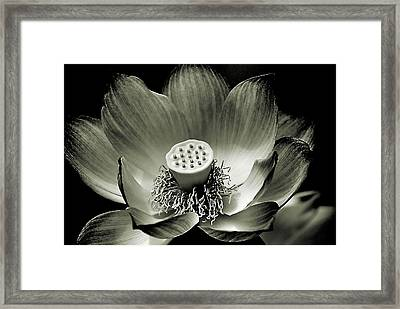 Framed Print featuring the photograph Platinum Lotus by Bob Wall