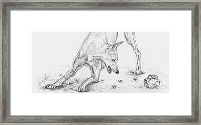 Play II Framed Print by Teresa Vecere