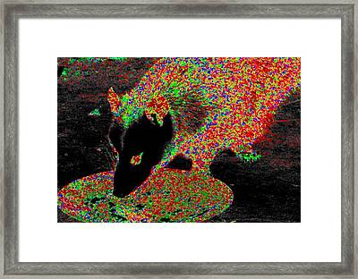 Played Possum Framed Print by Rdr Creative