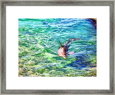 Playful Dolphin Framed Print by Jose Lopez