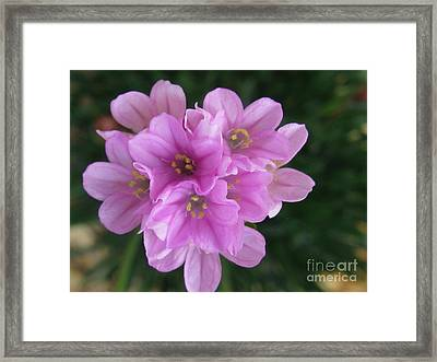 Framed Print featuring the photograph Playful by Tina Marie