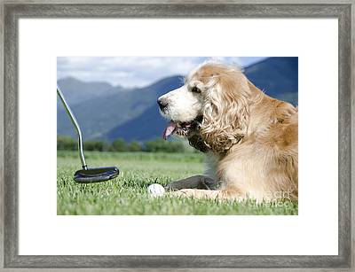 Playing Golf With A Dog Framed Print by Mats Silvan