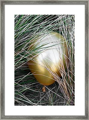 Framed Print featuring the photograph Playing Hide And Seek by Steve Taylor
