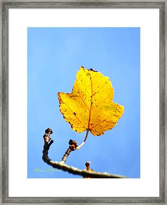 Framed Print featuring the photograph Playing Solitaire by Shana Rowe Jackson