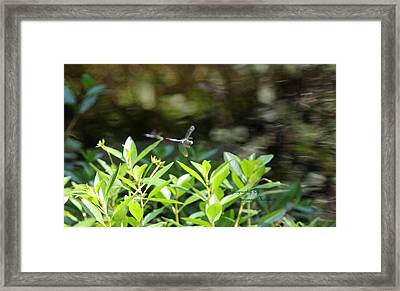 Playing Tag Framed Print by Suzanne  McClain