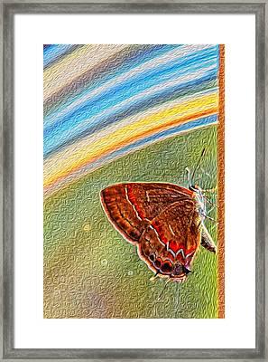 Playroom Butterfly Framed Print